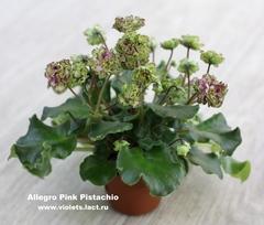 Allegro Pink Pistachio
