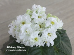 ЛЕ-Lady Winter
