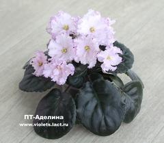 ПТ-Аделина