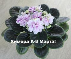 А-8 Марта