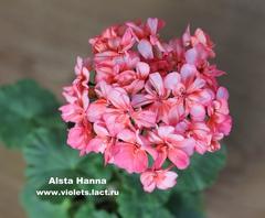 Alsta Hanna