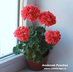 Ansbrook Peaches