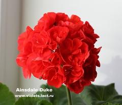 Ainsdale Duke