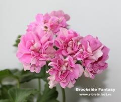 Brookside Fantasy