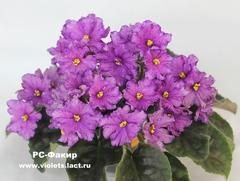 РС-Факир
