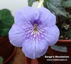 Serge's Revelation