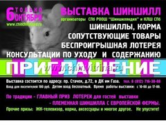"""IV Открытая выставка шиншилл в Питере """"Шиншилляндия - осень 2012"""""""