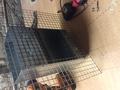 Кормушка бункерная для кроликов