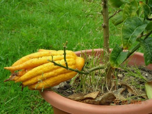 цитрон инструкция по применению для сада - фото 2