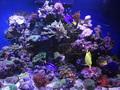Морские рыбки. ( купить )