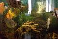 Пресноводные рыбки.