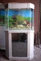 Купить готовые аквариумы и так- же под заказ.