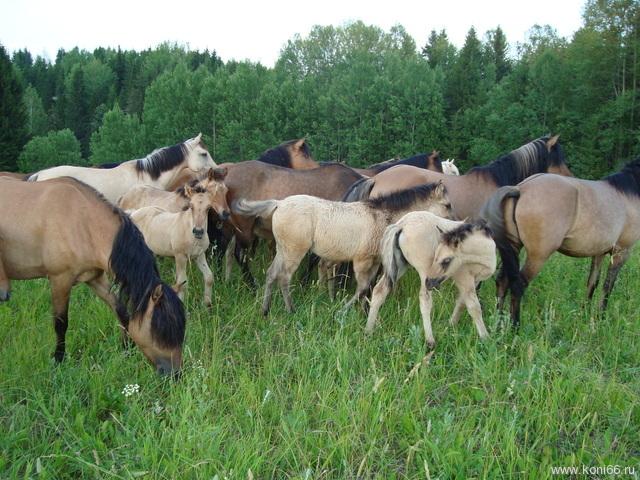 лошадей разных пород