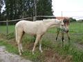 Лошади, кони, жеребец, кобыла, мерин, верховая езда, конный спорт, выездка, конкур, драйвинг, троеборье, соревнования