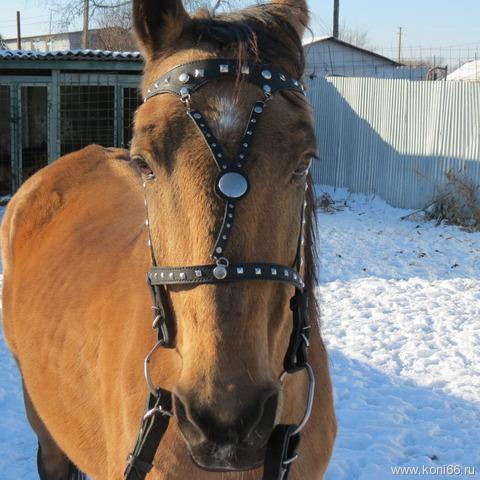 Как самим сделать недоуздок для лошадей