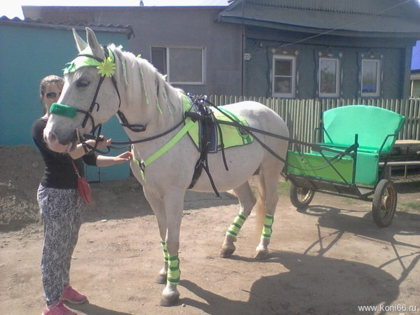 Брички для лошадей видео