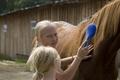 учимся уходу за лошадьми