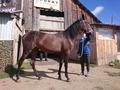 Купить лошадь, куплю лошадь, куплю коня, продажа лошадей, продам коня, лошади в аренду в екатеринбурге