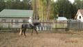 Наши кони и пони