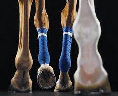 Ноги. Просто нравятся. Фото Tim Flach