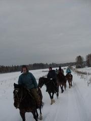 Частная конюшня в Краснояре