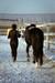 Разные рассказы о лошадях с картинками