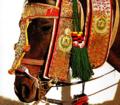 """Юлия Серкова """"Национальные конные украшения. Голова и шея"""""""