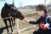 лошадки очень любят морковку!