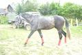 перспективный конь
