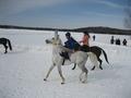 Коняшка белоснежный со снегом сливается,красавчик