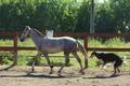 Белый конь ищет свою маленькую принцессу!!!