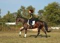 Перспективный выездковый конь