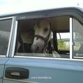 Магдональд на личном автомобиле выезжает на праздники!!