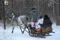 Катание на санях в новогодние каникулы!!!