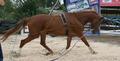 Лошади для сорта и любительской езды