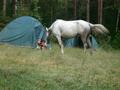 Конные походы и детский лагерь с Темной Лошадкой.
