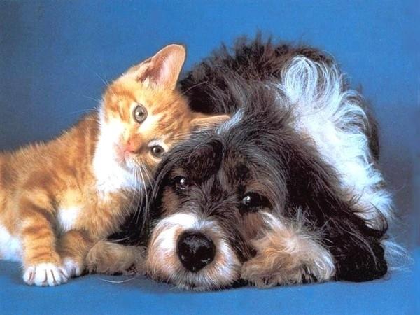 Алексей Свешников «Кошка с Собакой»