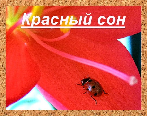 Красный сон.Леонид  Западенко