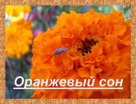 Оранжевый сон.Леонид  Западенко