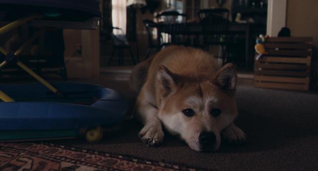 Хатико: Самый верный друг / Hachiko: A Dog