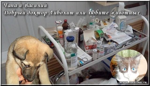 Чапа и Василий. Добрый доктор Айболит или любите животных…