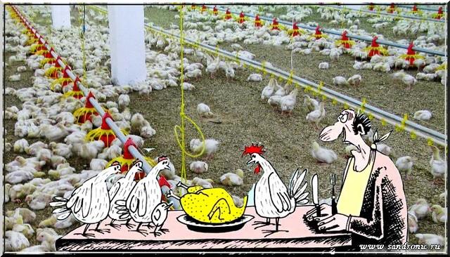 Курица не птица, или романтический вечер без политики…