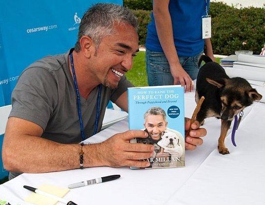 Цезарь Миллан. Мелисса Джо Пелтиер. Как вырастить идеальную собаку (2013) [PDF]