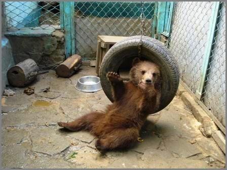 SOS. Help the bear cub.