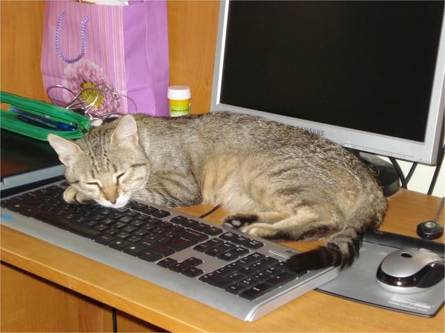 Виртуальное знакомство…Сандро  ищет невесту  для кота…