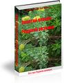 Справочник -Золотой корень-Родиола розовая