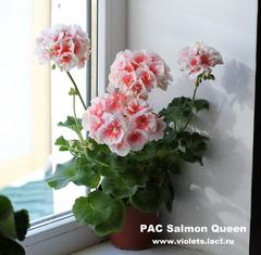 PAC Salmon Queen